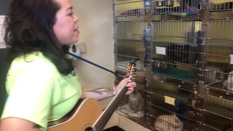 College Students Sings to Cats to Reduce Anxiety