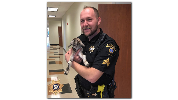 Police officers rescue baby goat in Forsyth County | 11alive com
