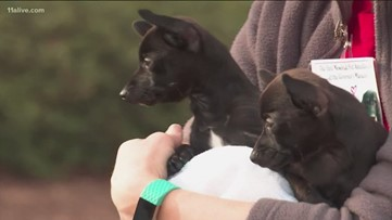 Georgia First Lady holds pet adoption event at governor's mansion