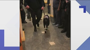 Police K9 D'Jango heads home after two surgeries