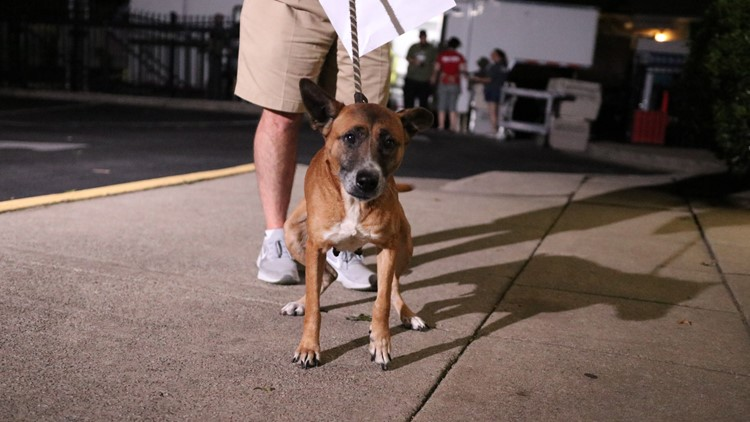 Several dogs who escaped Tropical Storm Barry to Atlanta ready for adoption