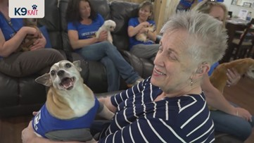 'People throw dogs away, but they are diamonds' | Senior dogs find new joy in final days
