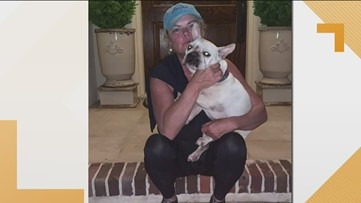 French Bulldog stolen out of parking lot found safe