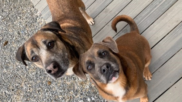Frank and Maurice need homes