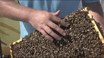 Honey bees housed across the metro in an effort to keep Atlanta beautiful