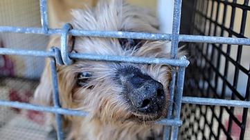 USDA under fire for weakening dog breeder inspection guidelines