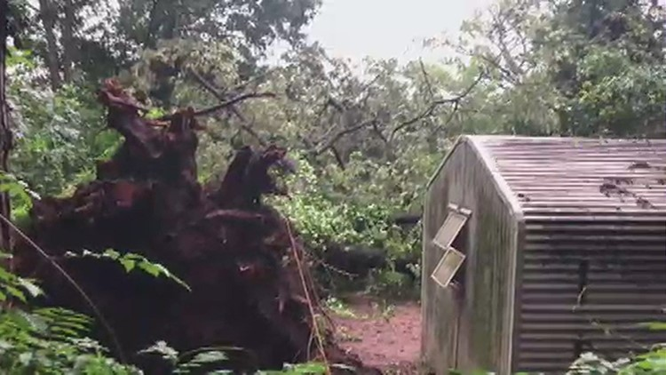 Tree falls at East Point home