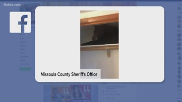 Bear on a shelf surprises sheriff's office