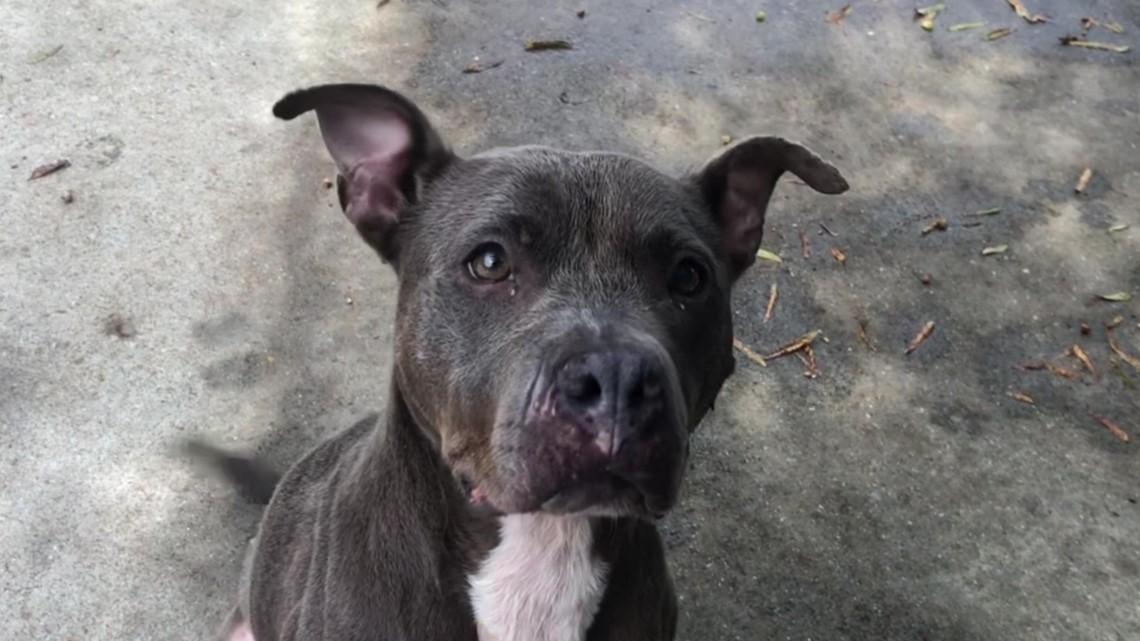Meet Dina: Gwinnett Animal Shelter's pet of the week