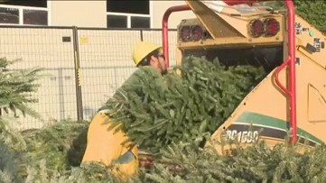 Bring One for the Chipper | Christmas is over, here's what you can do with that tree