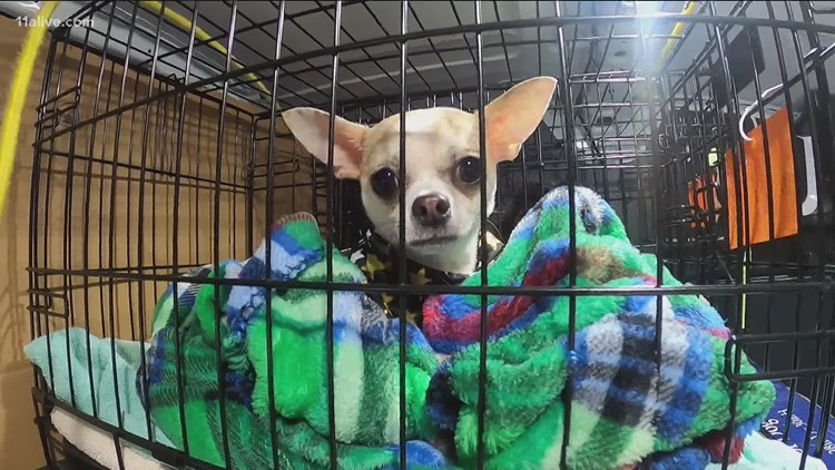 Financial help to fight puppy mills