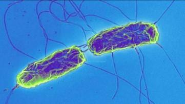 In Good Health: Drug-Resistant Superbugs