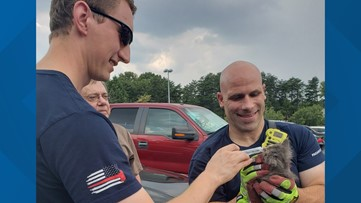 Kitten that rode from Woodstock to Alpharetta in engine bay rescued