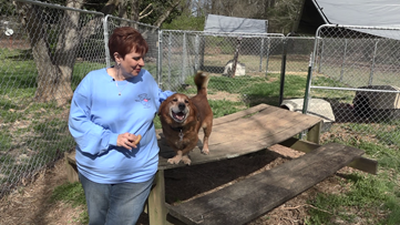 Women build fences to get dogs off chains