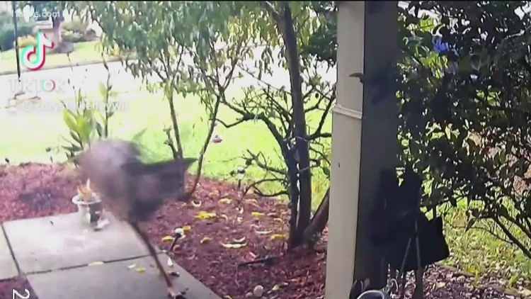 Family discovers identity of mystery intruder who broke into their home