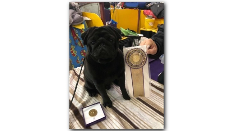 Booker T Pug given award