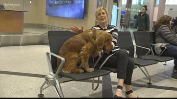 Group working to bring dogs from China to U.S. worried about impact of coronavirus outbreak