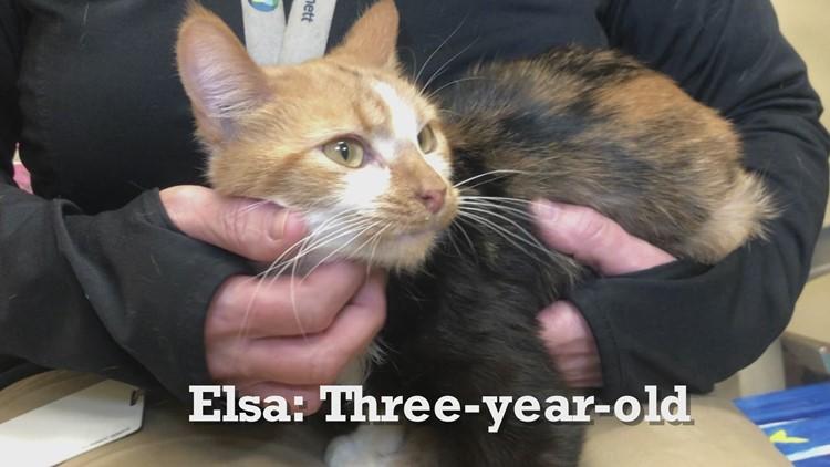 Meet Tulip & Elsa: Gwinnett Animal Welfare's pets of the week