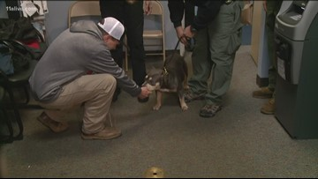 Stolen show dog reunited with his family