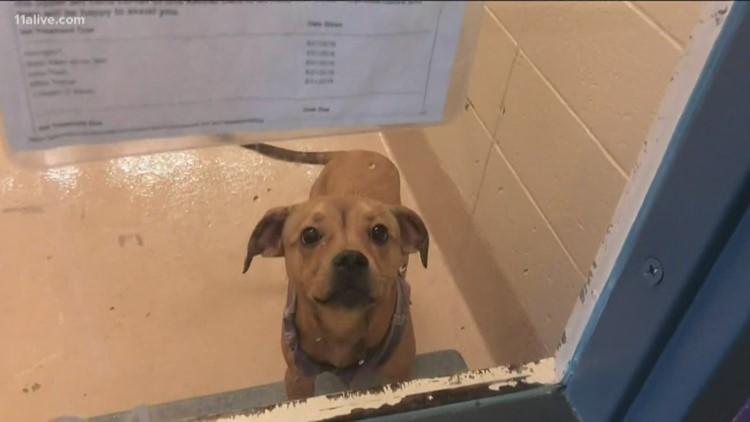 Gwinnett County animal shelter makes history