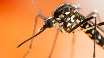 West Nile Virus found in DeKalb: Here's how you can protect yourself
