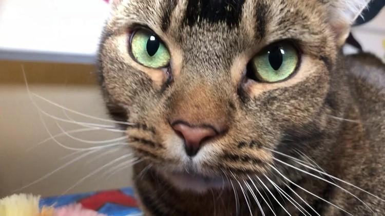 Pet of the Week: Daphne
