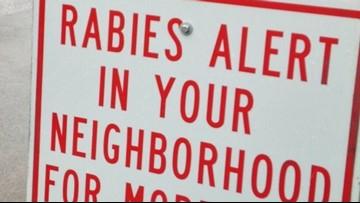 Rabies warning: Stray dogs found over rabid raccoon in Douglas County