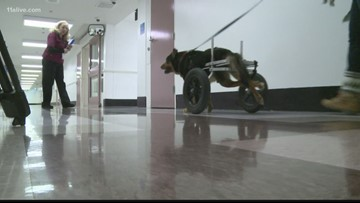 'If you look at Bandit, he's me': Dog in wheelchair adopted