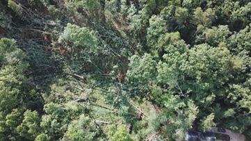 Was it a tornado or a downburst that hit Forsyth County?