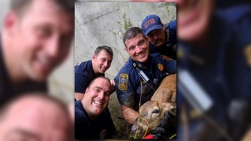 Firefighters rescue mother and baby deer from retention pond near Woodstock