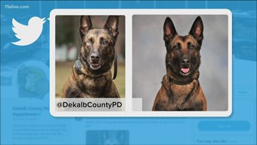 Once shot in face, DeKalb Police K-9 tracks down fatal hit-and-run suspect hiding in drain pipe