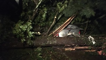 Six people rescued from van after being trapped by fallen tree