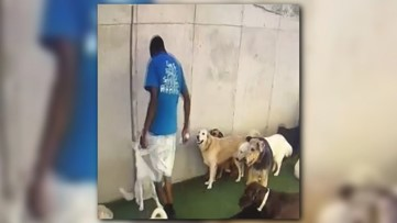 Dog daycare employee fired after video shows him kneeing pet in face