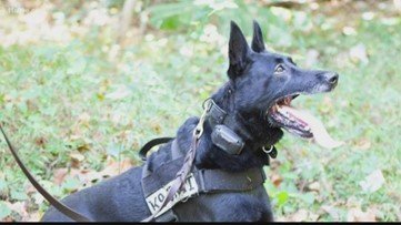 'It's what drives us': Surgeon who helped save police K-9 D'Jango's life speaks