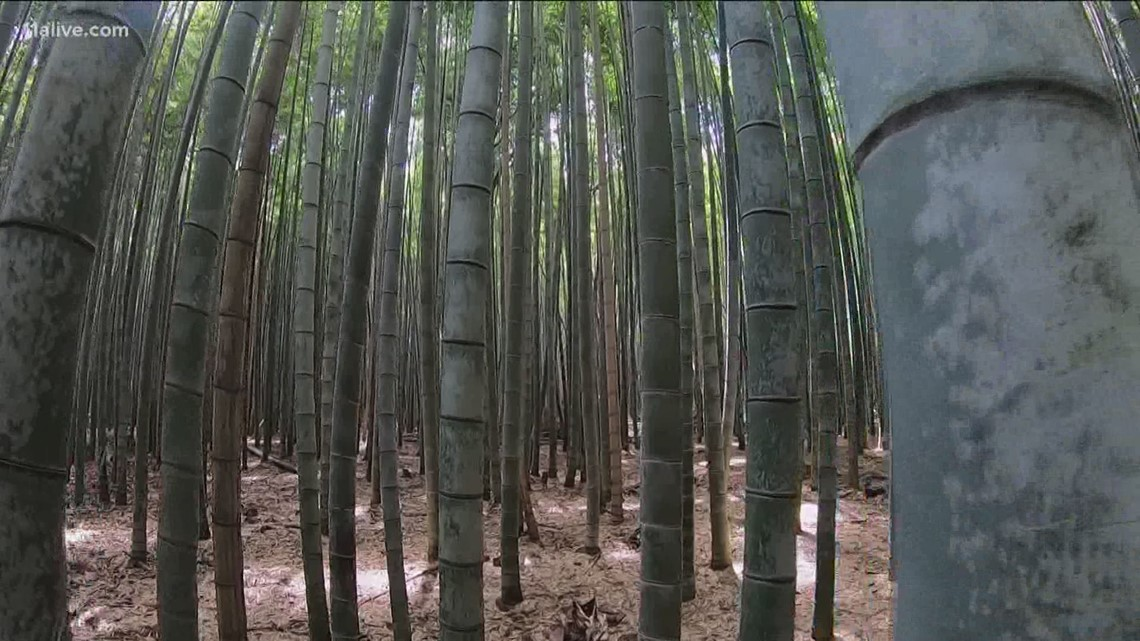 Far from the busy streets of Tokyo, the Bamboo Grove