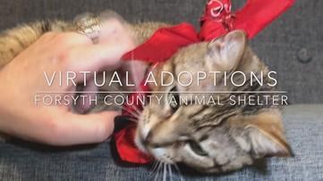 Forsyth Co. promotes virtual pet adoptions during temporary closure