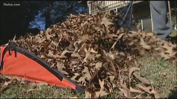 Why is raking all of your leaves unnecessary?