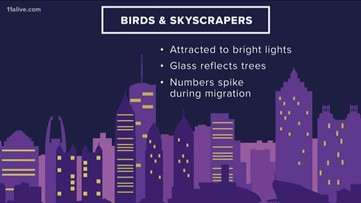 Statistic says up to 988M birds die each year from flying into skyscrapers
