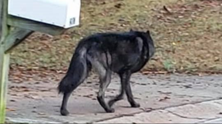 Paulding County dog attack