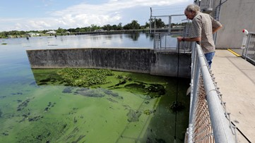Is your pet at risk from toxic algae blooms at Allatoona Lake?