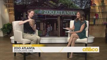 Visit Zoo Atlanta!