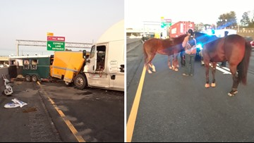 Horses rescued from crash with box truck, semi on I-85 in Gwinnett County