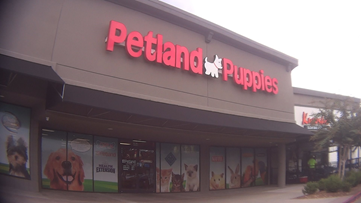 Humane Society alleges dead puppy found in freezer at Petland store in Kennesaw