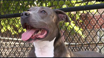 Meet Mimi & Smokey | Gwinnett County Animal Shelter's Pet's Of The Week