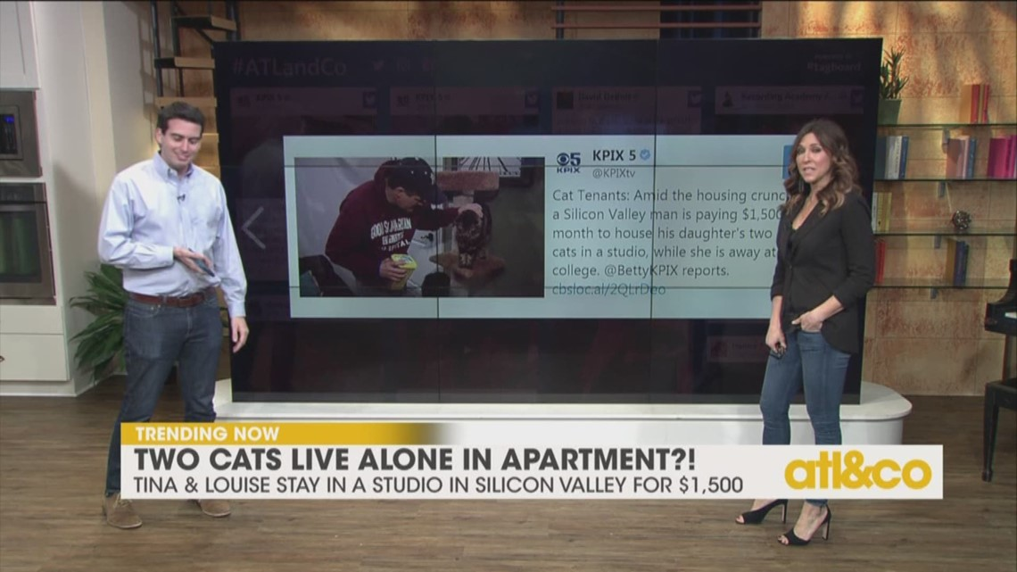 Cats Living Alone in a Studio Apartment?!