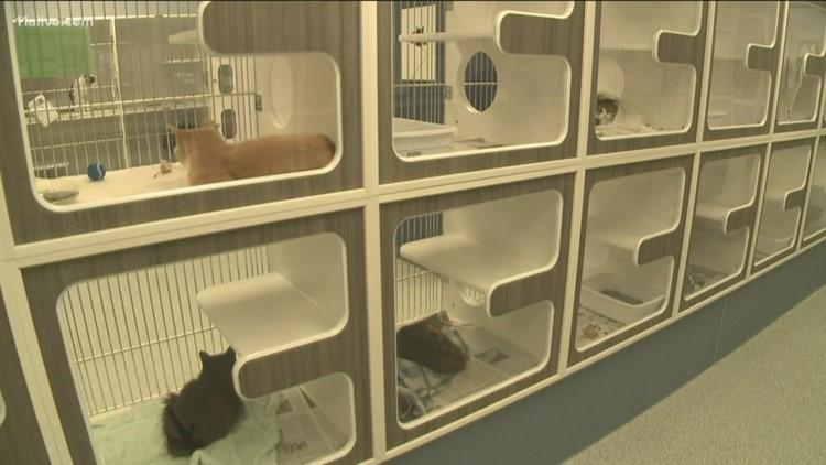 Volunteers help renovate animal shelter