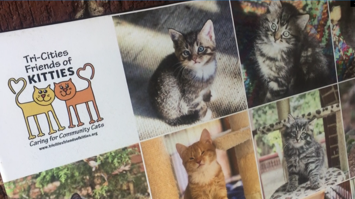 Tri-Cities non-profit helps neighborhood cats live their best lives -- all nine of them