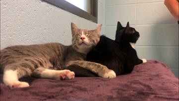 Meet Gabby & Cleo: Gwinnett Animal Welfare's pets of the week