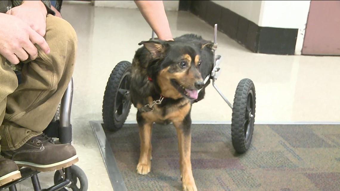 Bandit, wheelchair-bound Gwinnett County jail dog rescue, dies