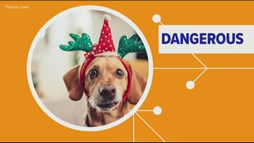 How holiday decorations can lead to a trip to the vet for your pet